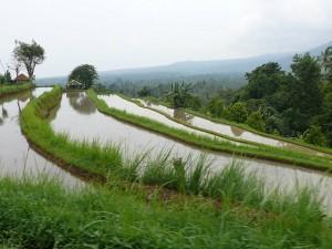 остров рисовых террас