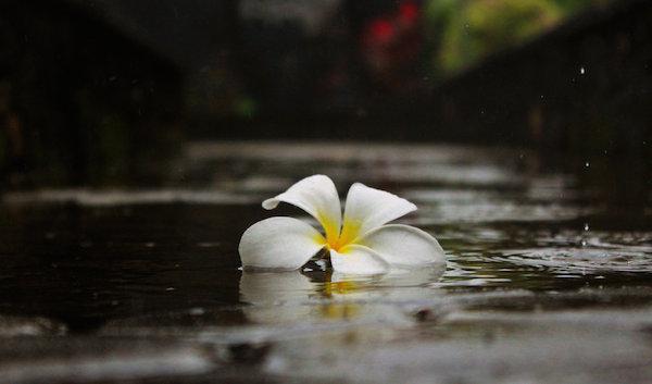 bali_in_the_rain_by_shokoshock-d5zgwl5
