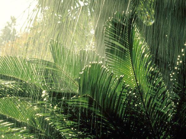 rain-in-bali