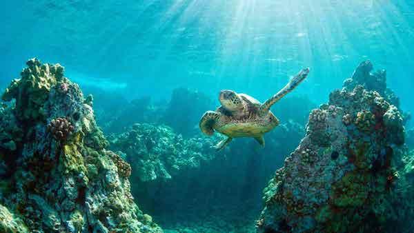 bali-turtle-island-06